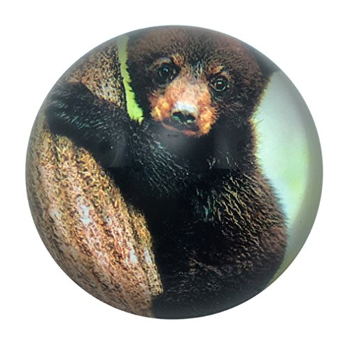Value Arts Black Bear Cub Glass Dome Paperweight, 3 Inch Diameter