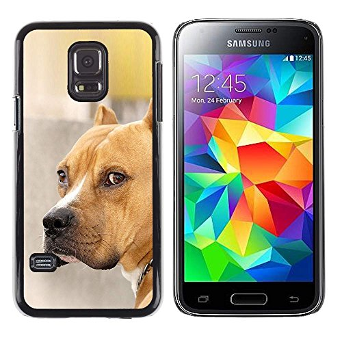 GIFT CHOICE / Slim Hard Protective Case SmartPhone Shell Cell Phone Cover for Samsung Galaxy S5 Mini, SM-G800 // Pit-Bull Dog Brown Golden Pet //