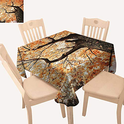 - UHOO2018 Square/Rectangle Polyester Tablecloth Table Cover Body of Old Tree Seedling Botany Woodsy Roots lling Maple Leaf for Dining Room,52x 52 inch
