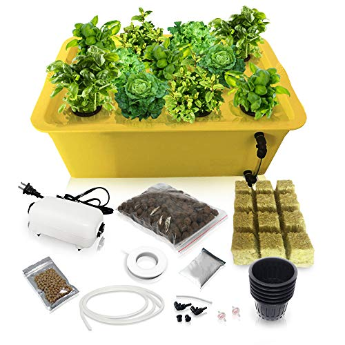 Herb Garden Starter Kit Indoor - Hydroponics Growing System with Nutrients and Herbs Seeds - Heirloom Non-GMO Cilantro, Parsley, Basil, Thyme, Mint - Complete All in One Ready to Grow (Herb Kit)