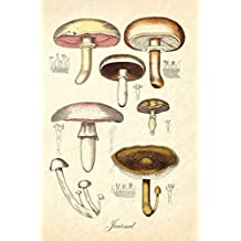 Journal: Vintage Antique Mushroom Botanical Illustration | 120 Blank Lined 6x9 College Ruled Pages