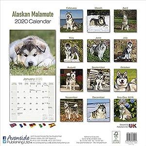 Alaskan Malamute Calendar - Dog Breed Calendars - 2019 - 2020 Wall Calendars - 16 Month by Avonside 46