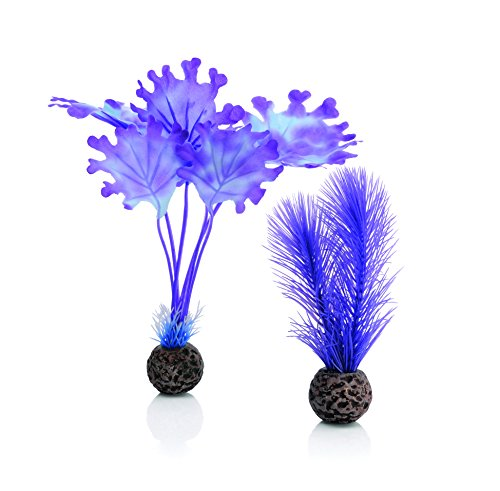 biOrb 46079.0 Kelp Set Small Purple Aquariums by biOrb