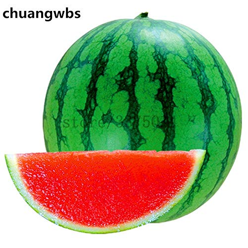 AXDZ 1PCS Melon seedless Watermelon Fruit Plant Variety Fresh Cool Summer Bonsai Plant for Home Garden as Kid Gift