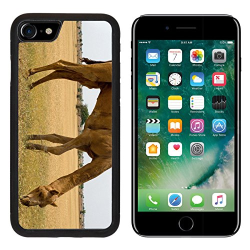 Luxlady Premium Apple iPhone 7 Aluminum Backplate Bumper Snap Case iPhone7 IMAGE ID: 26211809 Camels eating grass in the - In India Caravan Of Price