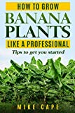 How to grow Banana Plants like a Professional: Beginner's guide and tips to get you started