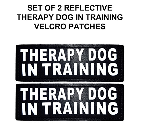 Reflective THERAPY TRAINING Patches harnesses