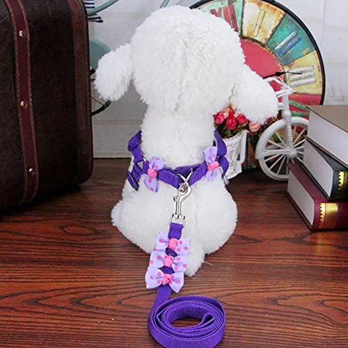 Stock Show Pet Adjustable Harness Nylon Strap Collar with Le