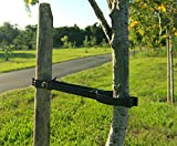 New Tree Support - Use one stake - Simple to apply - Easy to adjust - Support a tree all around …