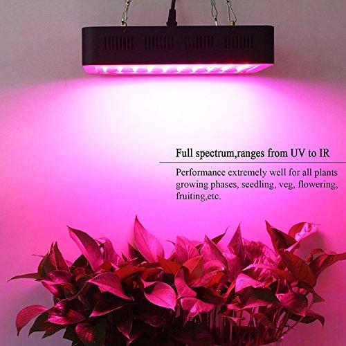 300w Led Grow Light Lightimetunnel Growing Light Plant
