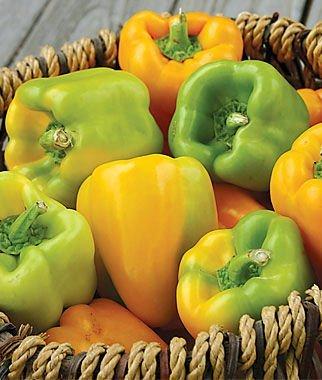 Sweet Flavorburst Hybrid Pepper Seeds 150 Seeds Upc 643451295962
