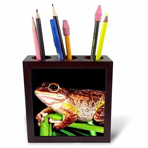 Cuban Mahogany - 3dRose ph_83784_1 Cuban Treefrog, Native to Cuba, Florida - NA02 DNO0053 - David Northcott - Tile Pen Holder, 5-Inch