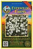 Everwilde Farms - 2000 Snow-in-Summer Wildflower Seeds - Gold Vault Jumbo Seed Packet