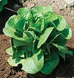 David's Garden Seeds Lettuce Winter Density Bibb D442A (Green) 500 Open Pollinated Seeds