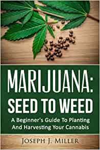Cannabis Seeds 101: Your Intro Guide To The Marijuana Seed