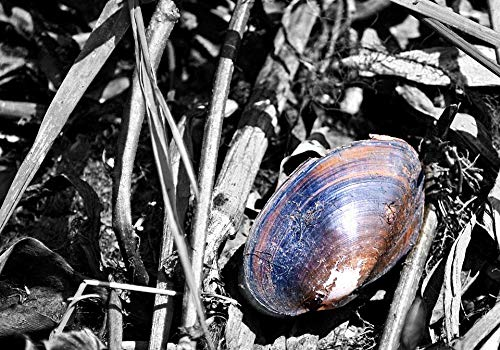 Home Comforts Canvas Print Snails Fossil Shells Dead Shells Fossilized Vivid Imagery Stretched Canvas 32 x 24