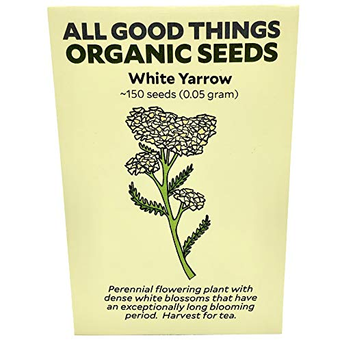 White Yarrow (Achillea millefolium) Seeds (~150): Certified Organic, Non-GMO, Heirloom, Open Pollinated Seeds from The United States