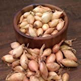 Shallot Sets Yellow,Perennial(8 Bulb) Plant spring or fall, Garden Vegetable