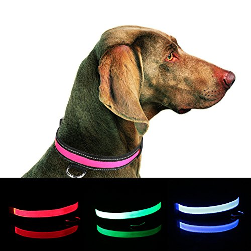 Collar Improved Visibility Safety Rechargeable