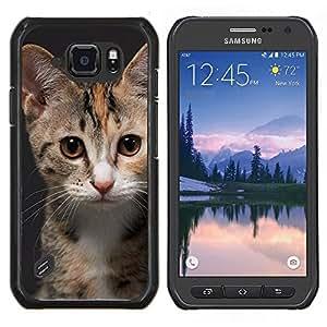 EJOOY---Cubierta de la caja de protección para la piel dura ** Samsung Galaxy S6Active Active G890A ** --Manx American Shorthair Gato rosado de la nariz