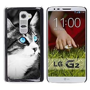 // PHONE CASE GIFT // Duro Estuche protector PC Cáscara Plástico Carcasa Funda Hard Protective Case for LG G2 / Azul del ojo de gato /