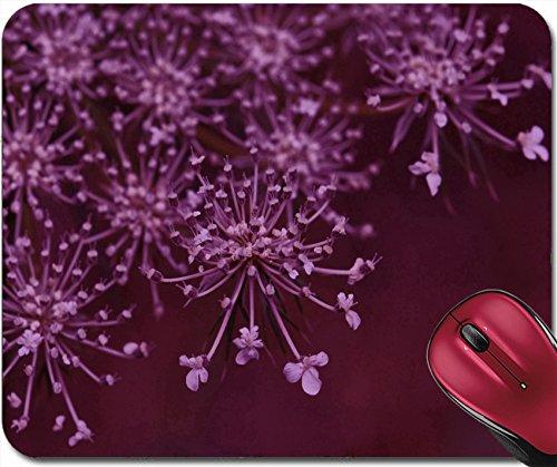w flowering macro abstract background Selective focus 29391948 (Yarrow Flowering)