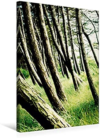 Lienzo textil prémium de 50 cm x 75 cm de alto, Wunderwelt Wald invita a un paseo de un tipo especial. Imagen sobre bastidor. Para humanos y animales (CALVENDO Natur);CALVENDO naturaleza
