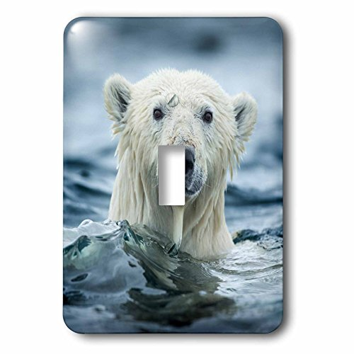 3dRose Danita Delimont - Bears - Canada, Repulse Bay, Polar Bear pokes its head above water. - Light Switch Covers - single toggle switch (lsp_257551_1) -