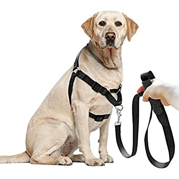51btGJeSv5L._SL500_AC_SS350_ amazon com didog dog harness & leash set, front lead for easy front lead dog harness at couponss.co