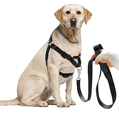 Didog Dog Harness & Leash Set,Front Lead for Easy Training,Walking,Climbing and Hiking for Small Medium Large Dog(Black,M (Harness Lead)