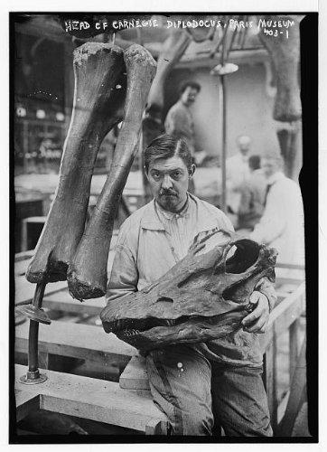 - HistoricalFindings Photo: Museum worker holding head of Carnegie Diplodocus,Paris,Frace,dinosaur