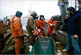 """Collector's photo of Members of the Norwegian Coast Guard (orange overaller) control fishing equipment used on board the Russian trawler """"Kilach""""."""
