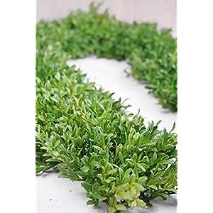 """Tea Leaf Mat Garland 8"""" x6 FT - Excellent Home Decor - Outdoor Indoor 2"""