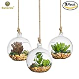 Beautiful Air Plant Orb -- Handmade - Create refreshing atmosphere in Terrace Garden - For succulents, flowers & colorful stones