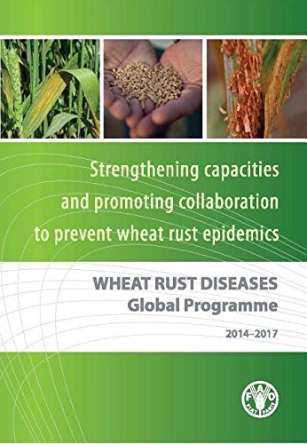 fao-wheat-rust-diseases-global-programme-2014-2017-strengthening-national-capacities-to-prevent-whea