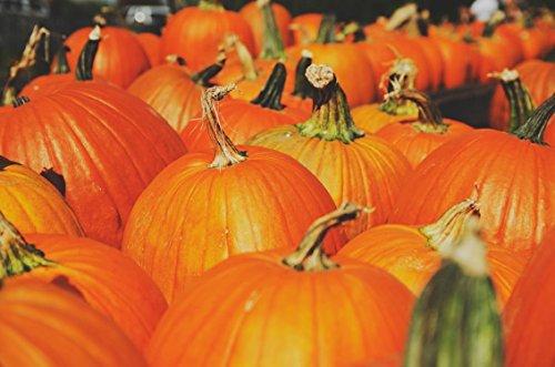 Nianyan 20 Big Max Pumpkin Seeds Cucurbita Maxima Great for Pies and Halloween -