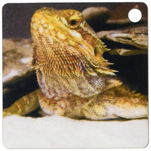 3d Rose 3dRose Bearded dragon lizard - NA02 DFR0024 - Dav...