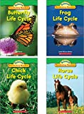 Scholastic Classroom Resources Science Vocabulary