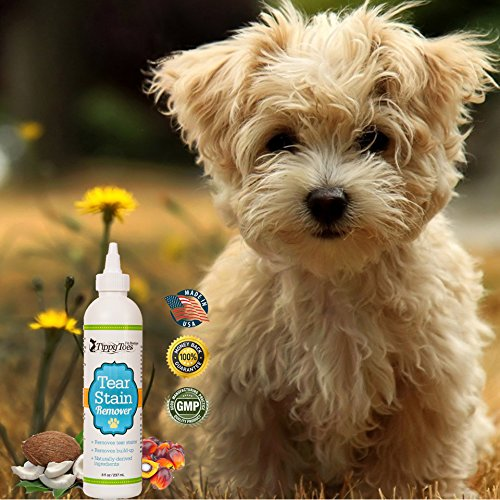 Dog Tears Up Rug: Dog Tear Stain Remover Premium Quality