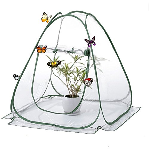 DalosDream Insect and Butterfly Habitat Terrarium Pop-up – 31.5 Inches Tall (Clear)
