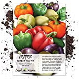Seed Needs, Rainbow Bell Pepper Blend (Capsicum annuum) 100 Seeds Non-GMO