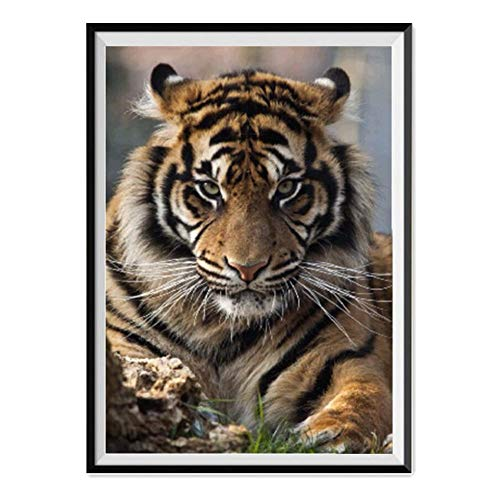 Leepakyuan DIY 5D Diamond Painting by Number Kits, Full Drill Crystal Rhinestone Embroidery Pictures Arts Craft for Home Wall Decor Gift, Aggressive Tiger, 12inch×16inch ()