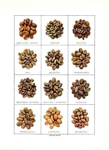 (Coffee bean varieties Mocha Bogota Maracaibo &c. 1911 vintage color food print)