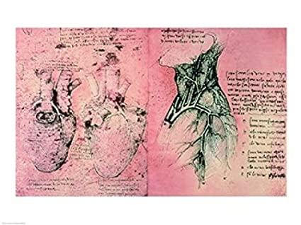Amazon Anatomical Drawing Of Hearts And Blood Vessels Poster