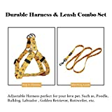 "QQPETS Dog Harness Leash Set, Adjustable Heavy Duty No Pull Halter Harnesses for Puppy Extra Small Dogs, Back Clip, Anti-Twist, Perfect for Walking (XS(12""-18"" Chest Girth), Yellow"