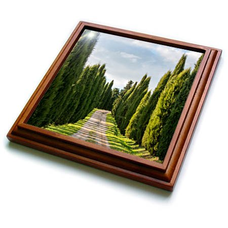 - 3dRose Danita Delimont - Roads - Italy, Tuscany, Long Driveway lined with Cypress trees - 8x8 Trivet with 6x6 ceramic tile (trv_277692_1)