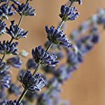 EMISH-Organic-Dried-Lavender-Flowers-101-Raw-French-Culinary-Lavender-Resealable-Bag-Lavender-Sachet