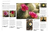 The Practical Illustrated Guide to Growing Cacti