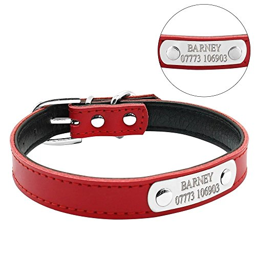 Didog Adjustable Leather Padded Custom Dog Collar with Engraved Nameplate,Fit Cats and Small Medium Dogs,Red,M Size (Nameplate Leather)