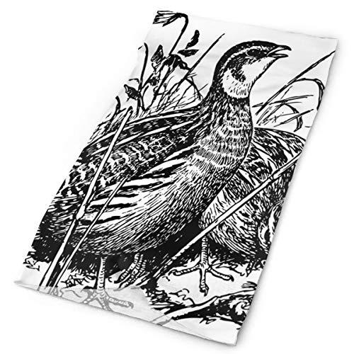 Headwear Headband Head Scarf Wrap Sweatband,Common Birds Sketchy Wildlife Meadow Flowers Grass Ecology Fauna Drawing Design,Sport Headscarves For Men Women ()